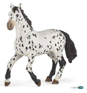 Слика на Апалуса коњ