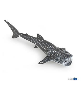 Слика на Кит ајкула